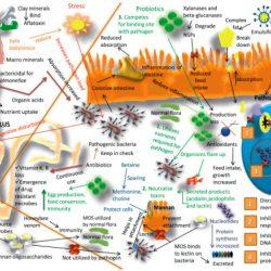 فیتاز و اسید آلی,اسید لاکتیک ,دستگاه گوارش , قابلیت هضم