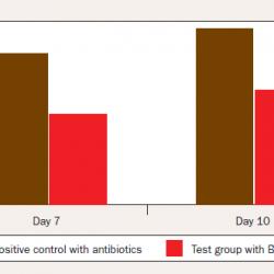 پروبیوتیک بیوسل،تاثیر بیوسل بر کاهش مرگ و میر جوجه ها ,فلور گوارشی طیور