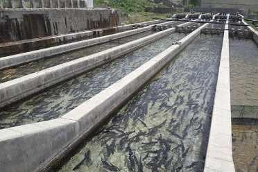 پروبیوتیک آبزیان ، ماهی ، پرورش ماهی ، غذای ماهی