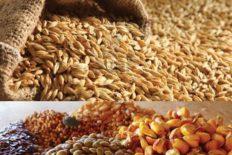 صنعت خوراک دام و طیور,خوراک دام و طیور,آبزیان,دام و طیور,تولید خوراک دام ,کنسانتره