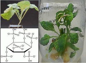 آنزیم فیتاز در گیاهان,خرید خوراک دام,خرید پروبیوتیک طیور,قیمت نهاده ها ,فیتات ,اسید فایتیک ,کنجاله