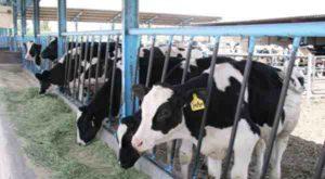 خوراک دام و طیور,تامین خوراک دام و طیور,خرید خوراک دام و طیور, تحقیقات کشاورزی