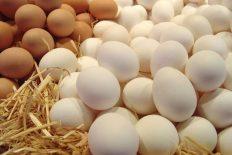 مصرف تخم مرغ,مرغ تخم گذار,خرید خوراک دام وطیور,خرید پروبیوتیک طیور ,گوشت طیور
