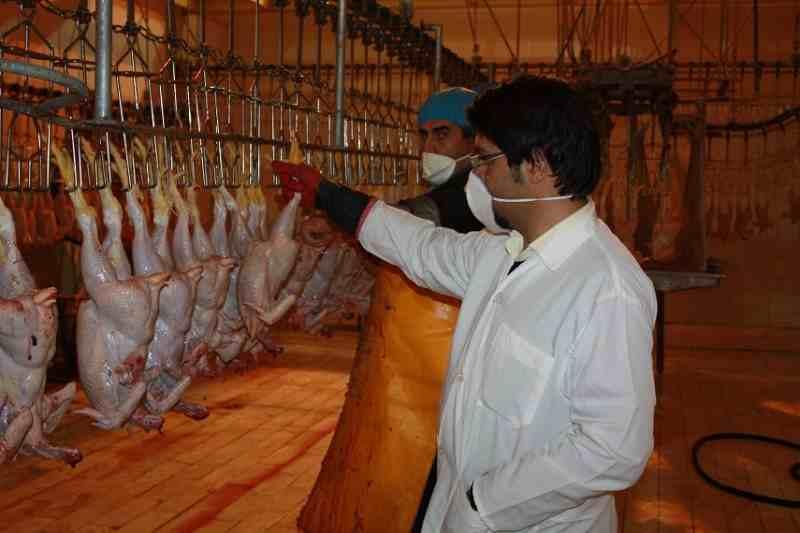 دام و طیور,کشتارگاه دام و طیور,خوراک دام و طیور,خرید مکمل های دام و طیور , گوشت سالم