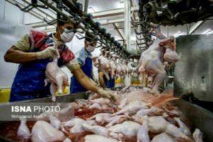 نهاده های دامی,مرغداران,خوراک دام و طیور,پروبیوتیک طیور