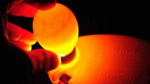 صنعت تخم مرغ,تعیین جنسیت تخم مرغ,جوجه کشی,معدوم سازی جوجه های نر