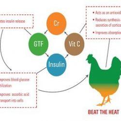 ویتامین c ,ایمنی طیور ,جیره ,سن جوجه ,خرید خوراک دام و طیور ,مدیریت مرغداری