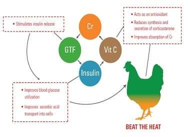 ویتامین c ,ایمنی طیور ,جيره ,سن جوجه ,خرید خوراک دام و طیور ,مدیریت مرغداری