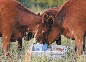 سلنیوم در تغذیه دام ,جیره طیور ,جیره پستانداران ,تغذیه دام ,بیماری دام