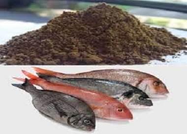 پودر ماهی ,جوجه های گوشتی ,غذای طیور ,روغن ماهی ,طیور تخمگذار ,