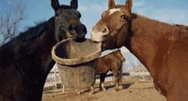 مشکلات قلبی اسب ,توزیع مواد غذایی در اسب ,سلامت اسب,,,