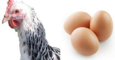 عوامل موثر بر تولید طیور تخم گذار