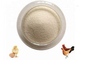 فیتازهای نسل جدید برای کاهش هزینه تخم مرغ