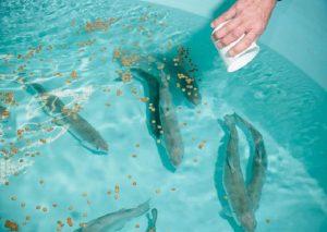 ریز مغذی های در خوراک ماهی و آبزیان