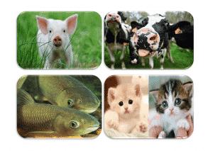 بررسی سالانه جهانی تولید خوراک
